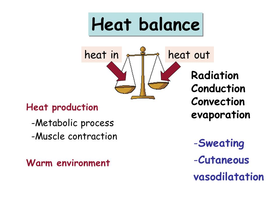 Heat balance heat inheat out Heat production -Metabolic process -Muscle contraction Warm environment Radiation Conduction Convection evaporation -Sweating -Cutaneous vasodilatation
