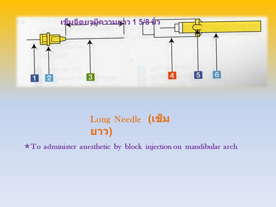Anesthetic Cartridge ( ยา ชา )  To hold liquid anesthetic for local injection in the oral cavity