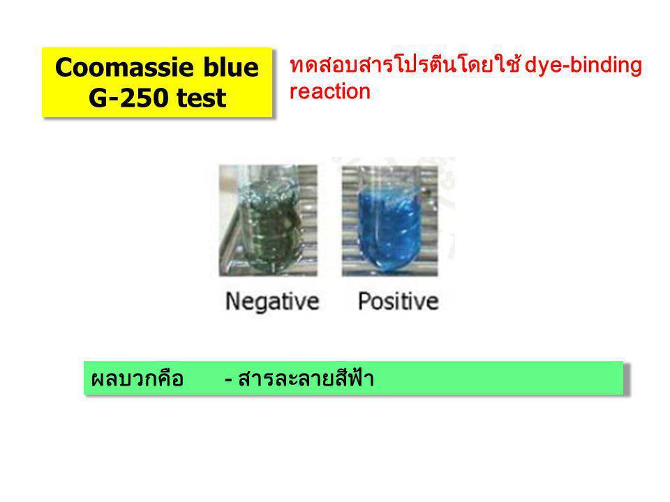 Coomassie blue G-250 test ทดสอบสารโปรตีนโดยใช้ dye-binding reaction ผลบวกคือ- สารละลายสีฟ้า