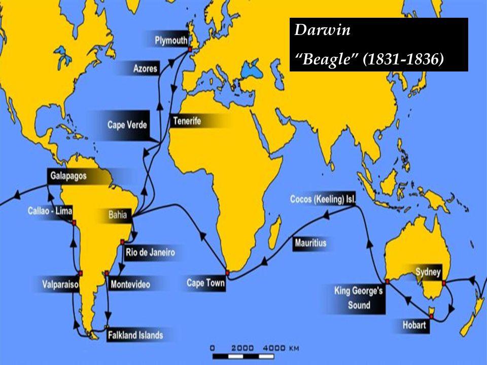 """Darwin """"Beagle"""" (1831-1836)"""