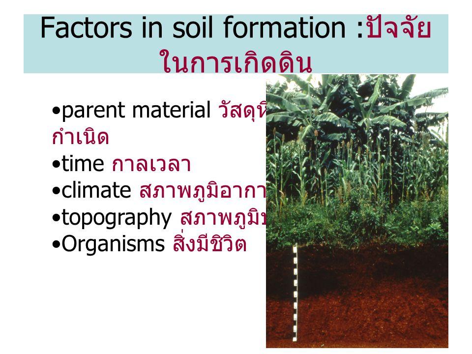 13 parent material วัสดุหินต้น กำเนิด time กาลเวลา climate สภาพภูมิอากาศ topography สภาพภูมิประเทศ Organisms สิ่งมีชิวิต Factors in soil formation : ปัจจัย ในการเกิดดิน