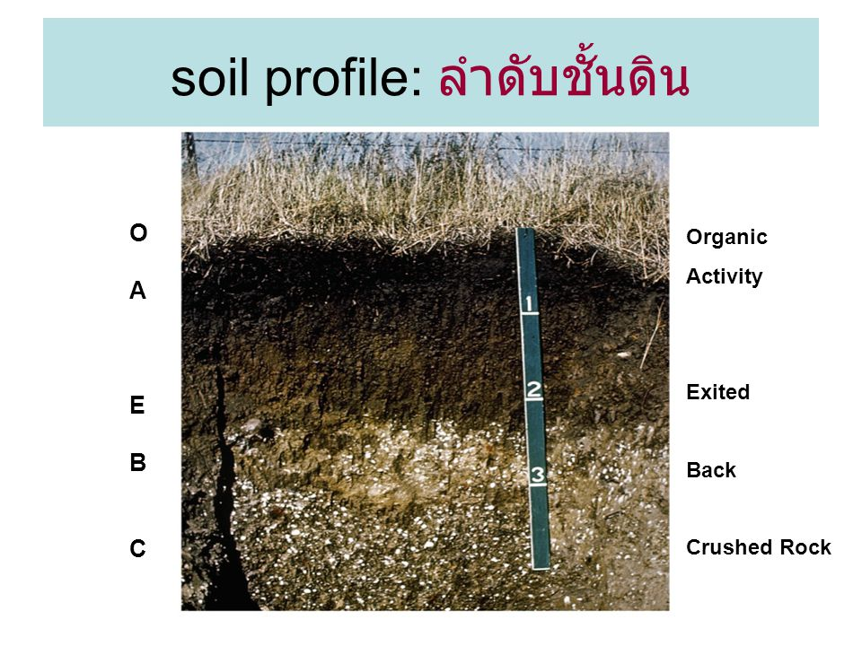 17 soil profile: ลำดับชั้นดิน OAEBCOAEBC Organic Activity Exited Back Crushed Rock