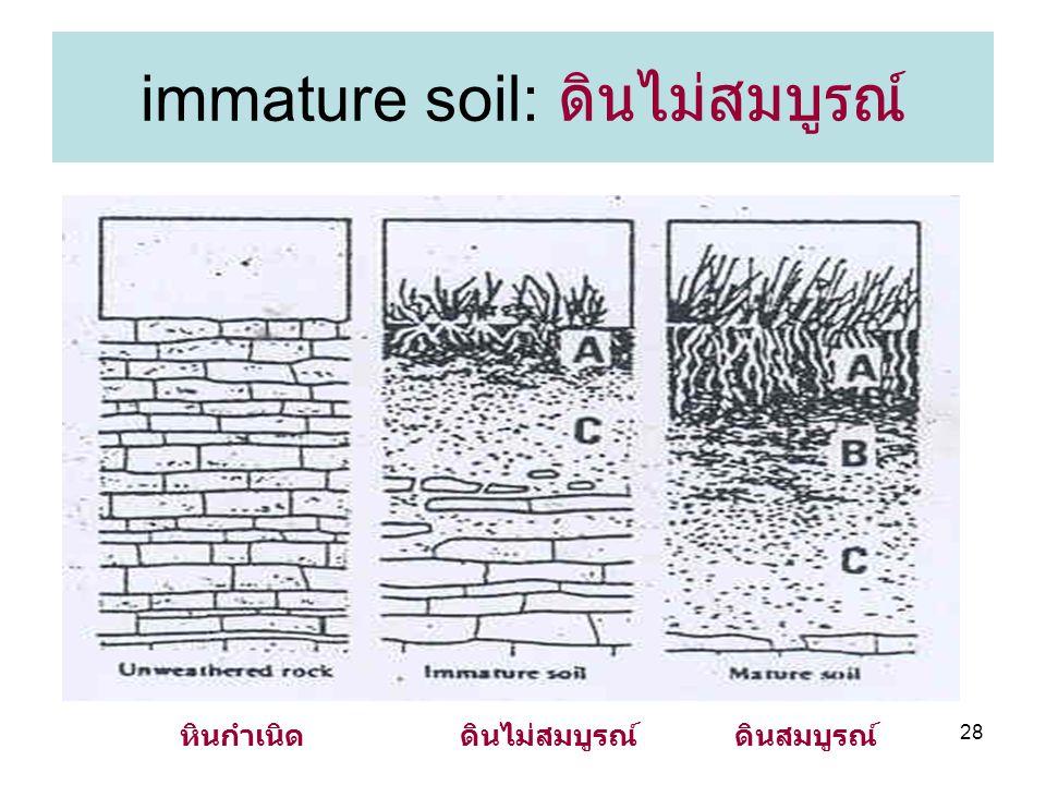 28 immature soil: ดินไม่สมบูรณ์ ดินไม่สมบูรณ์ดินสมบูรณ์หินกำเนิด