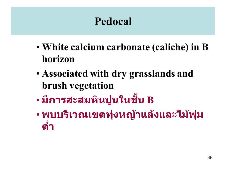 35 Pedocal White calcium carbonate (caliche) in B horizon Associated with dry grasslands and brush vegetation มีการสะสมหินปูนในชั้น B พบบริเวณเขตทุ่งหญ้าแล้งและไม้พุ่ม ต่ำ