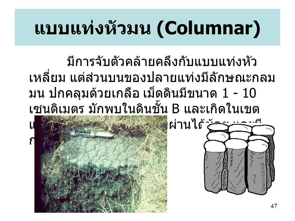 47 แบบแท่งหัวมน (Columnar) มีการจับตัวคล้ายคลึงกับแบบแท่งหัว เหลี่ยม แต่ส่วนบนของปลายแท่งมีลักษณะกลม มน ปกคลุมด้วยเกลือ เม็ดดินมีขนาด 1 - 10 เซนติเมตร มักพบในดินชั้น B และเกิดในเขต แห้งแล้ง น้ำและอากาศซึมผ่านได้น้อย และมี การสะสมของโซเดียมสูง