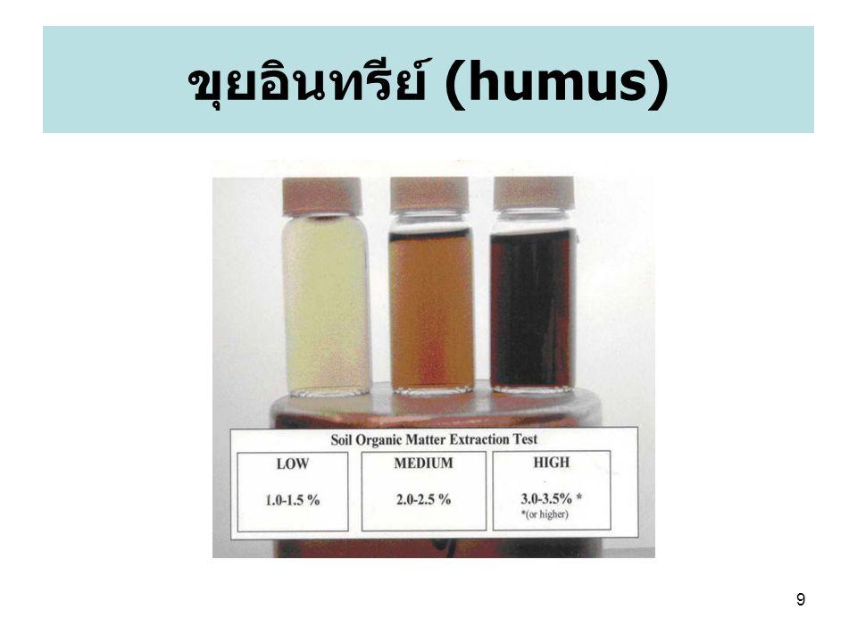 10 ขุยอินทรีย์ (humus) Humus (Latin – soil )