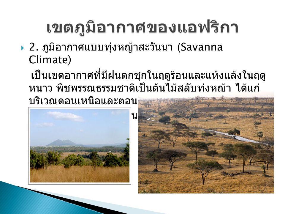  2. ภูมิอากาศแบบทุ่งหญ้าสะวันนา (Savanna Climate) เป็นเขตอากาศที่มีฝนตกชุกในฤดูร้อนและแห้งแล้งในฤดู หนาว พืชพรรณธรรมชาติเป็นต้นไม้สลับทุ่งหญ้า ได้แก่