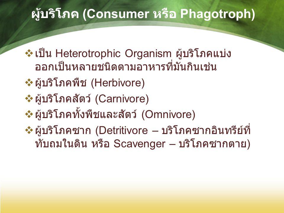 ผู้บริโภค (Consumer หรือ Phagotroph)  เป็น Heterotrophic Organism ผู้บริโภคแบ่ง ออกเป็นหลายชนิดตามอาหารที่มันกินเช่น  ผู้บริโภคพืช (Herbivore)  ผู้บริโภคสัตว์ (Carnivore)  ผู้บริโภคทั้งพืชและสัตว์ (Omnivore)  ผู้บริโภคซาก (Detritivore – บริโภคซากอินทรีย์ที่ ทับถมในดิน หรือ Scavenger – บริโภคซากตาย )