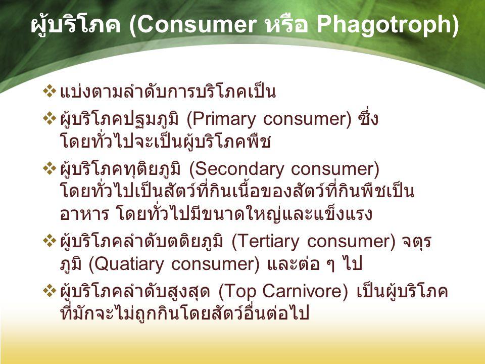 ผู้บริโภค (Consumer หรือ Phagotroph)  แบ่งตามลำดับการบริโภคเป็น  ผู้บริโภคปฐมภูมิ (Primary consumer) ซึ่ง โดยทั่วไปจะเป็นผู้บริโภคพืช  ผู้บริโภคทุติยภูมิ (Secondary consumer) โดยทั่วไปเป็นสัตว์ที่กินเนื้อของสัตว์ที่กินพืชเป็น อาหาร โดยทั่วไปมีขนาดใหญ่และแข็งแรง  ผู้บริโภคลำดับตติยภูมิ (Tertiary consumer) จตุร ภูมิ (Quatiary consumer) และต่อ ๆ ไป  ผู้บริโภคลำดับสูงสุด (Top Carnivore) เป็นผู้บริโภค ที่มักจะไม่ถูกกินโดยสัตว์อื่นต่อไป