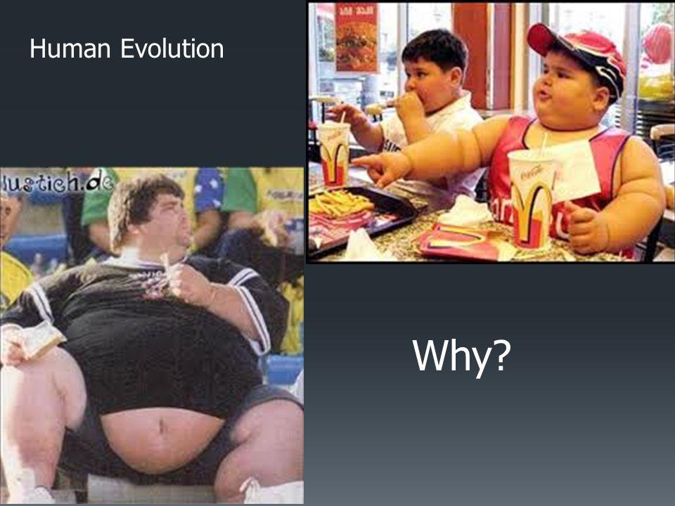 Human Evolution Why?