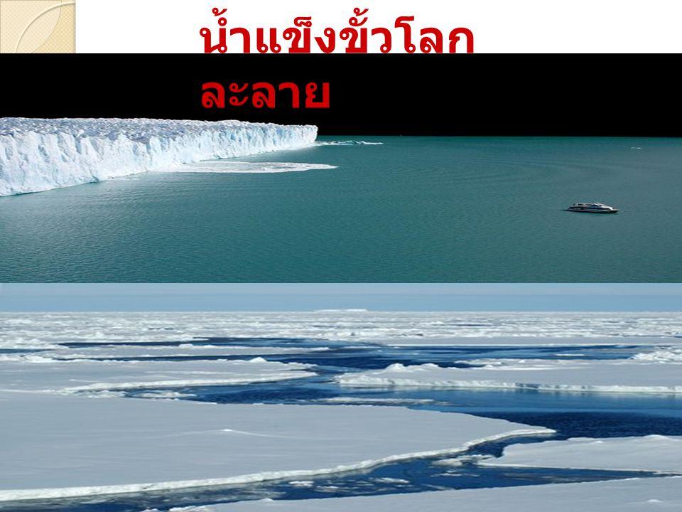 น้ำแข็งขั้วโลก ละลาย