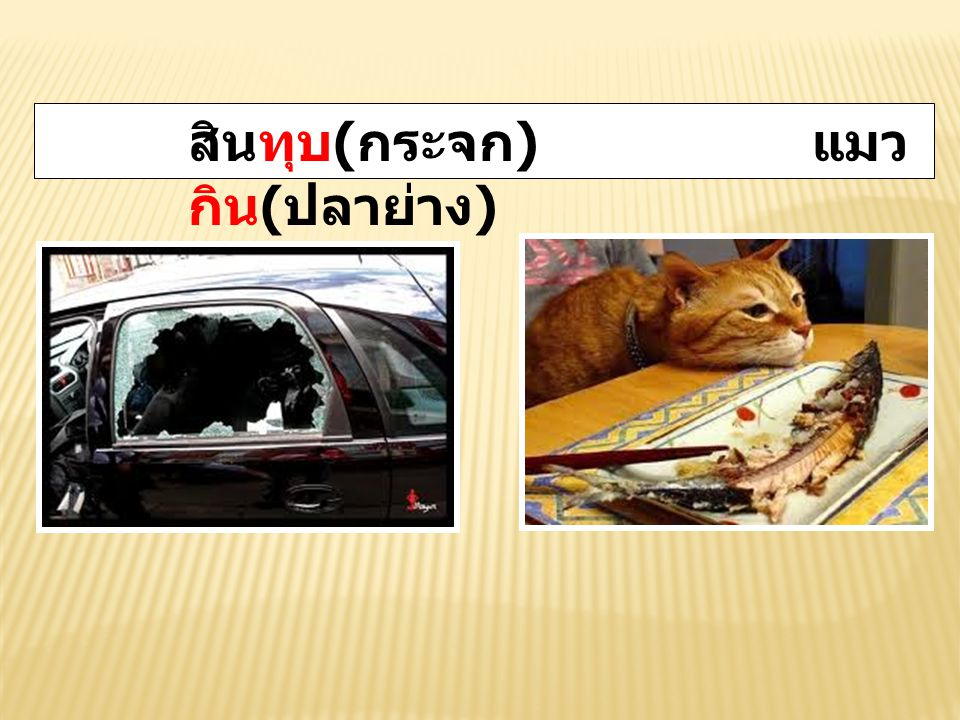 สินทุบ ( กระจก ) แมว กิน ( ปลาย่าง )