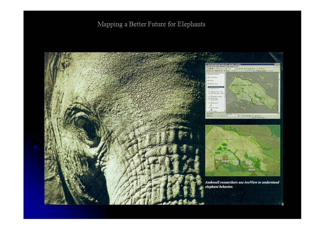 Mapping a Better Future for Elephants 5050