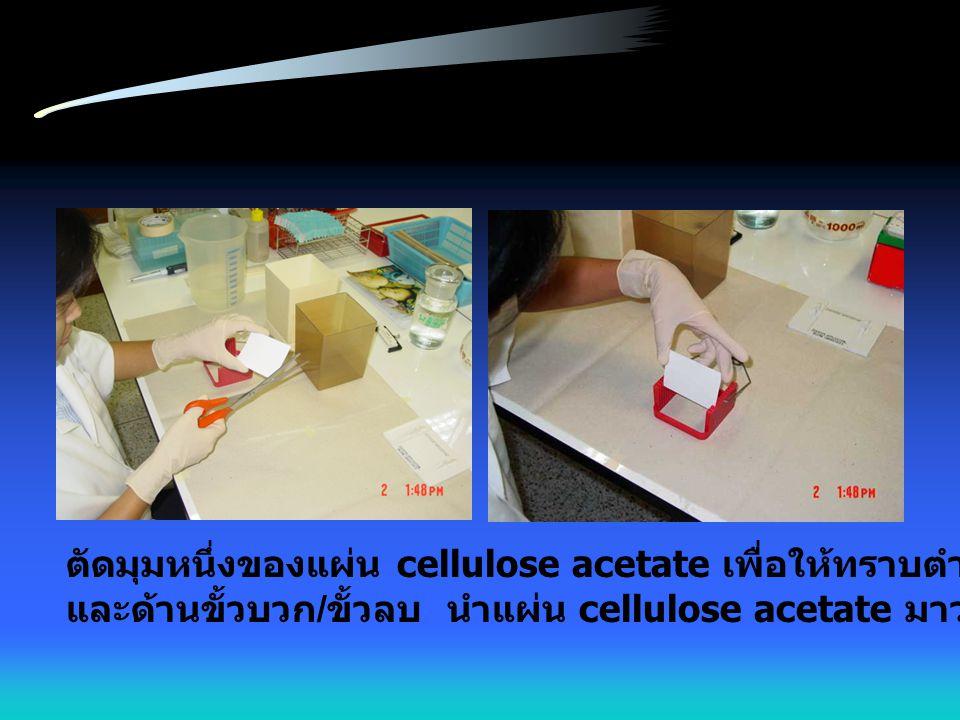 ตัดมุมหนึ่งของแผ่น cellulose acetate เพื่อให้ทราบตำแหน่งของสารตัวอย่าง และด้านขั้วบวก / ขั้วลบ นำแผ่น cellulose acetate มาวางใน rack