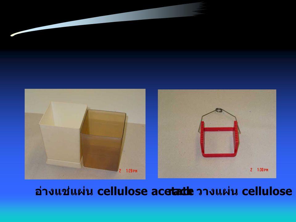 อ่างแช่แผ่น cellulose acetaterack วางแผ่น cellulose acetate