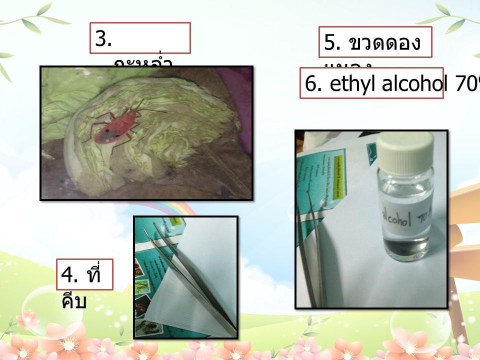 3. กะหล่ำ ปลี 4. ที่ คีบ 5. ขวดดอง แมลง 6. ethyl alcohol 70%