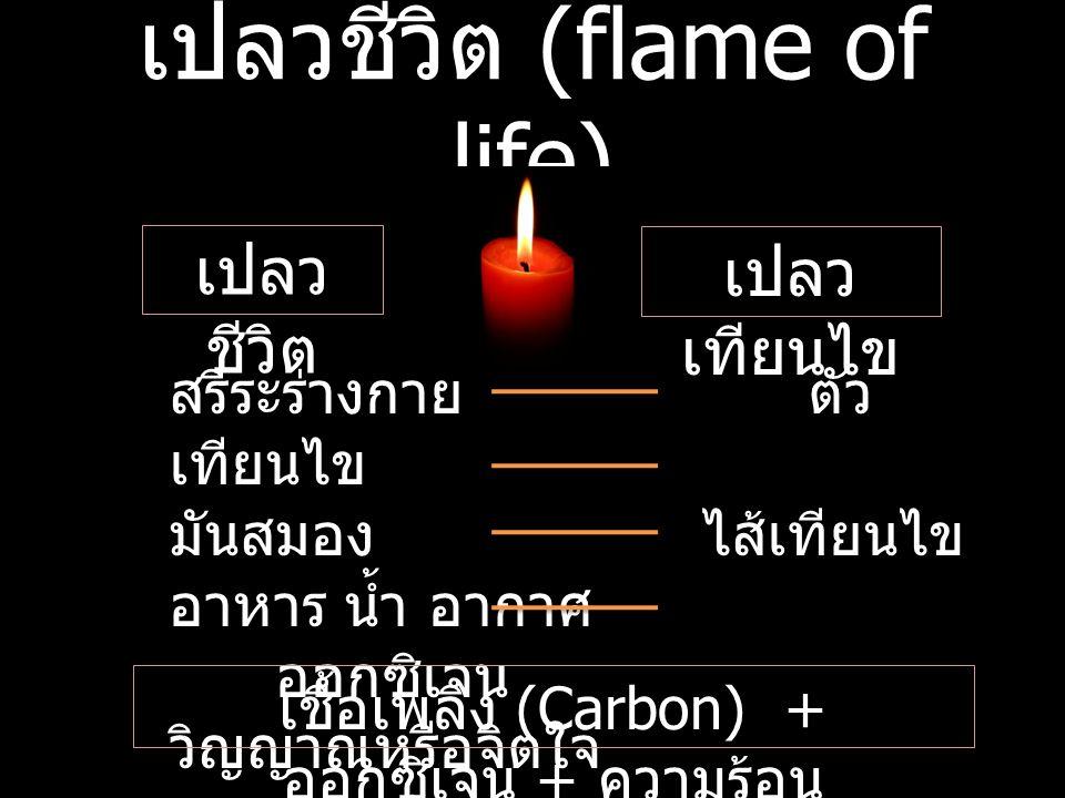 เปลวชีวิต (flame of life) เปลว ชีวิต เปลว เทียนไข สรีระร่างกายตัว เทียนไข มันสมองไส้เทียนไข อาหาร น้ำ อากาศ ออกซิเจน วิญญาณหรือจิตใจ ความร้อน เชื้อเพลิง (Carbon) + ออกซิเจน + ความร้อน