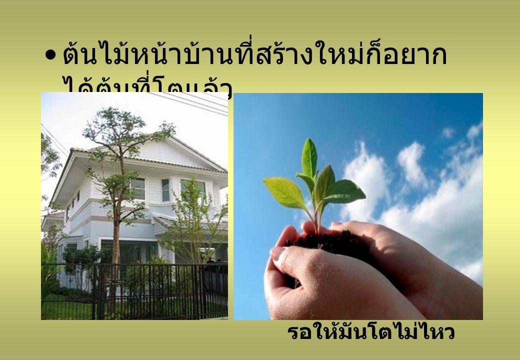ต้นไม้หน้าบ้านที่สร้างใหม่ก็อยาก ได้ต้นที่โตแล้ว รอให้มันโตไม่ไหว