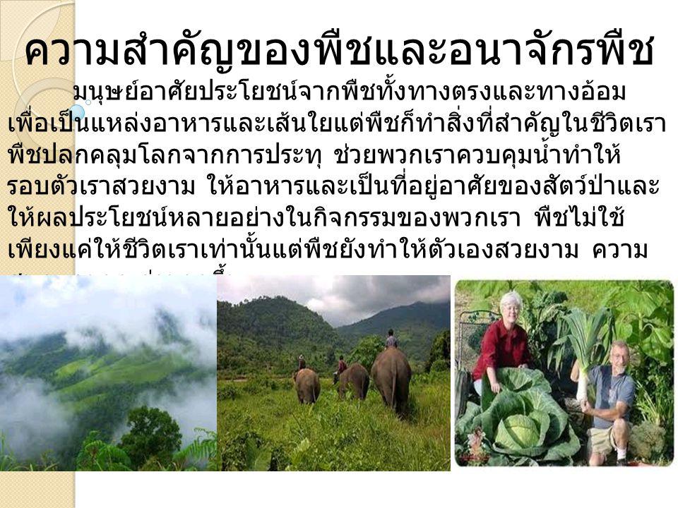 ความสำคัญของพืชและอนาจักรพืช มนุษย์อาศัยประโยชน์จากพืชทั้งทางตรงและทางอ้อม เพื่อเป็นแหล่งอาหารและเส้นใยแต่พืชก็ทำสิ่งที่สำคัญในชีวิตเรา พืชปลกคลุมโลกจ