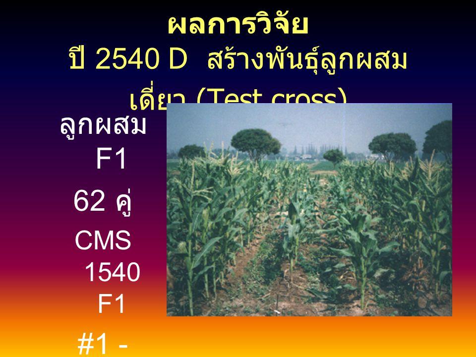 ผลการวิจัย 2539 LR ขยายสายพันธุ์แท้ที่ ผ่านการคัดเลือก 11 สายพันธุ์ ได้เมล็ด # เฉลี่ย 489 กรัม / สาย พันธุ์ Vigor = 2.9 Ear Aspect =1.8 Grain Type = Y