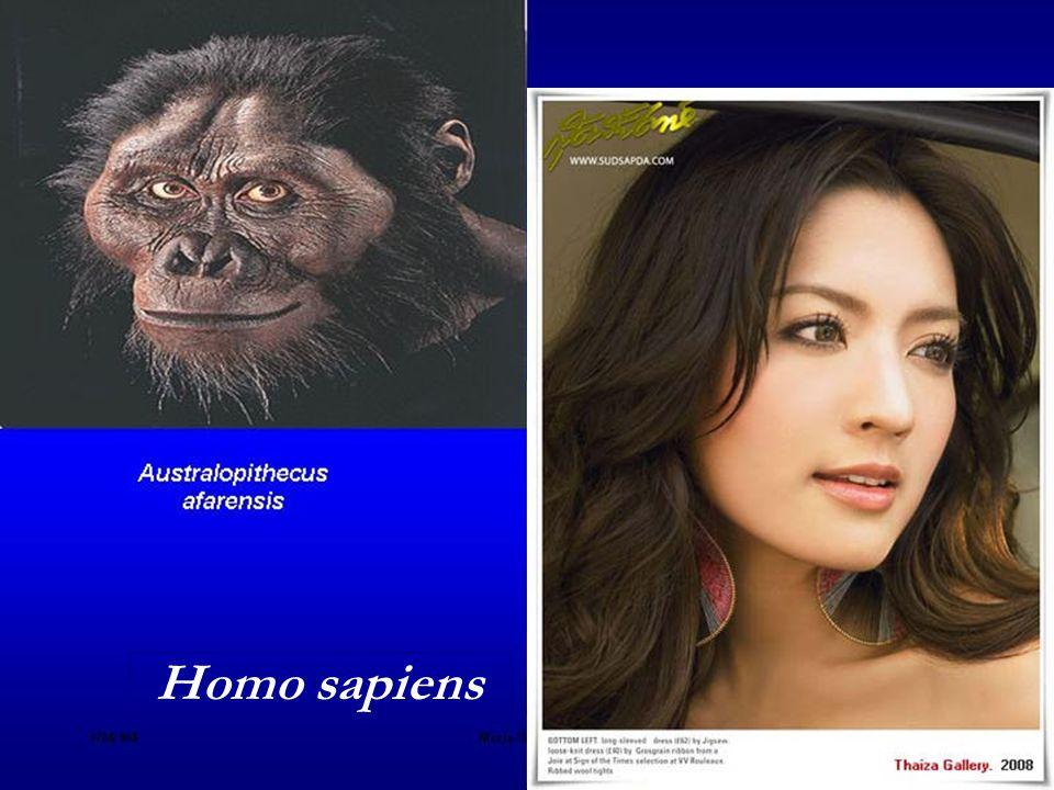 วิวัฒนาการมนุษย์ Australopithecus afarensis - Homo sapiens 50,000 BC