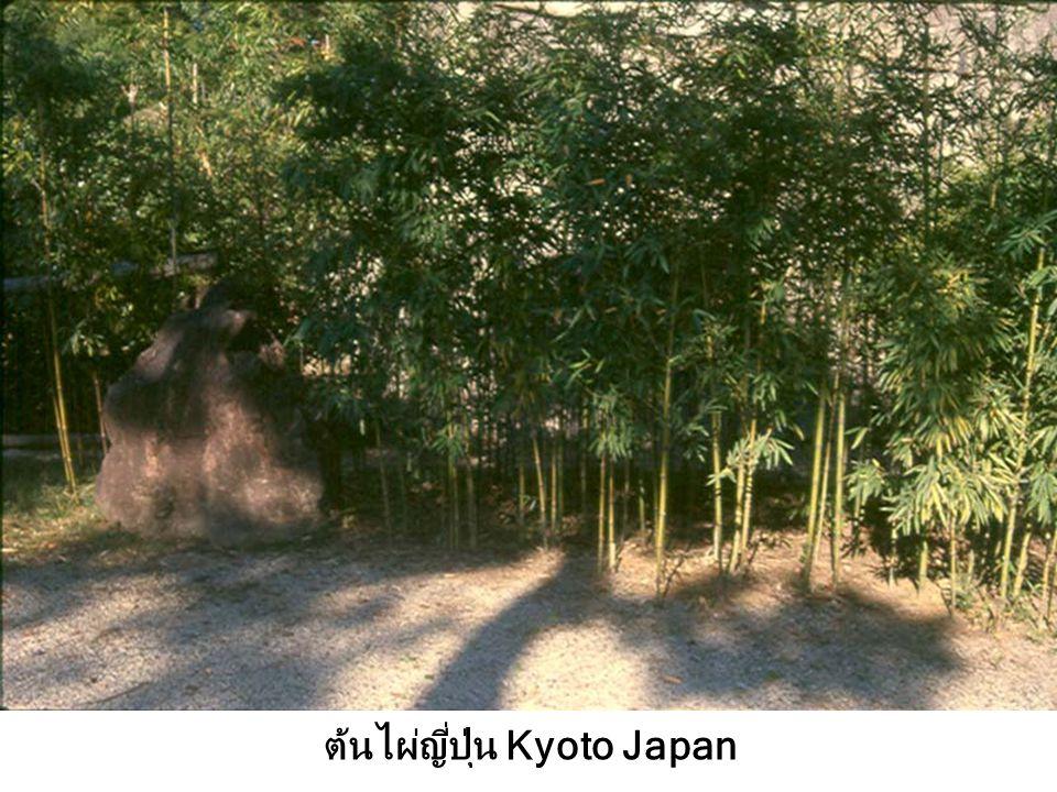 อ.ดร.วีระพันธ์ Kyoto Japan'46