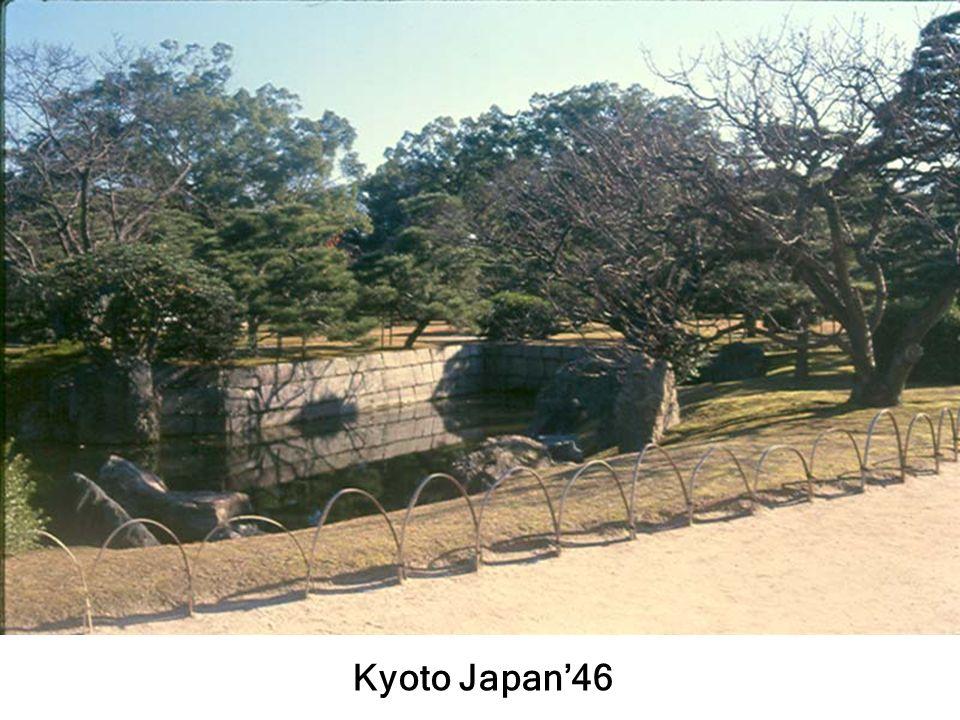 ต้นสนญี่ปุ่นวัดเรียวจิ