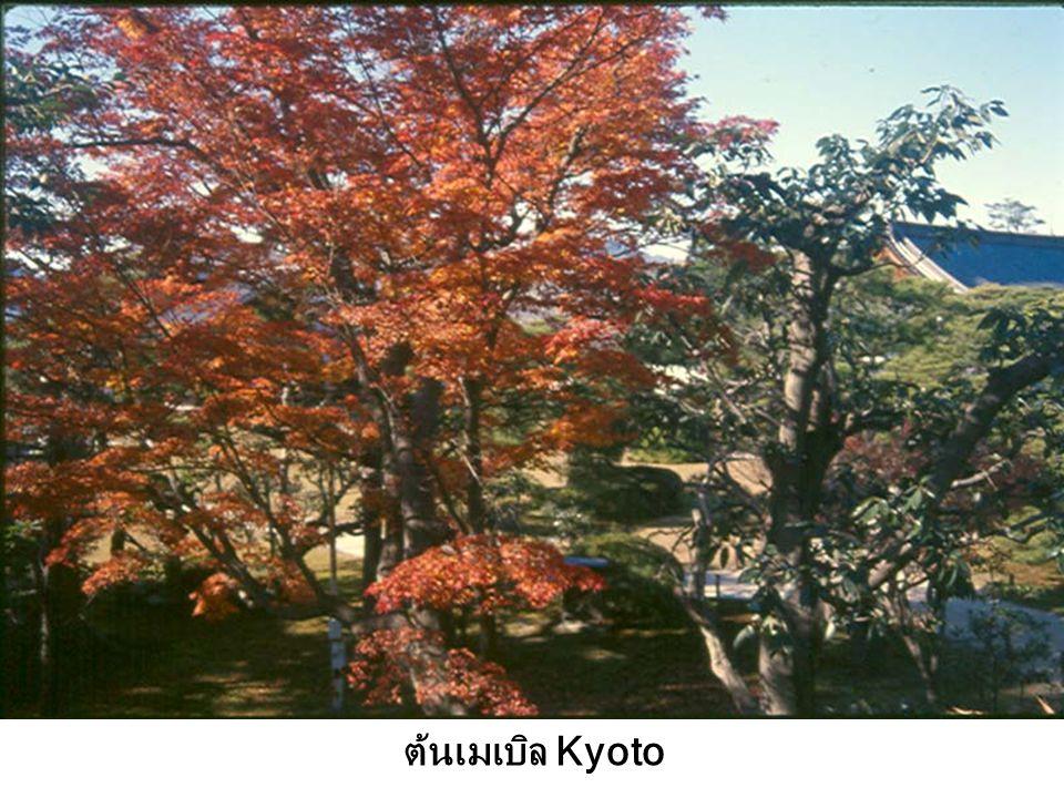 ประตูรั้วไม้ไผ่ Kyoto Japan'46