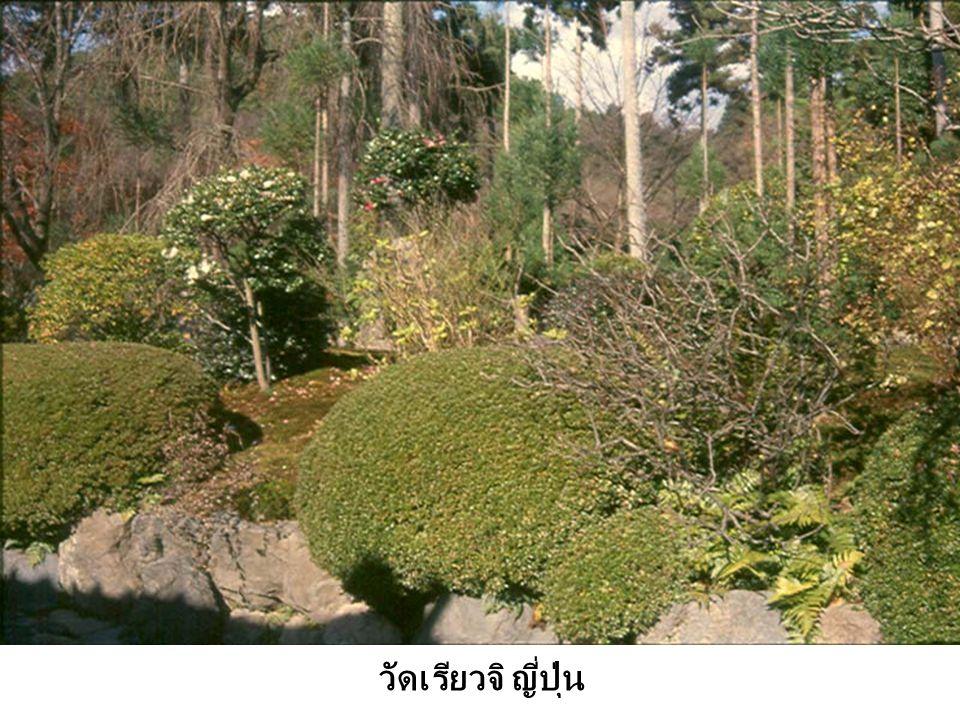ทางเดิน + พืชพรรณ ในวัดเรียวจิ