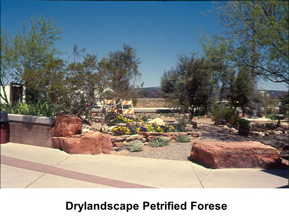 Drylandscape Petrified Forese