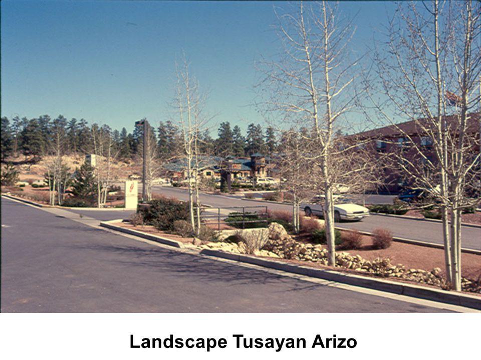 Landscape Tusayan Arizo