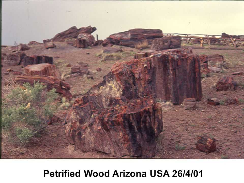 Petrified Wood Arizona USA 26/4/01