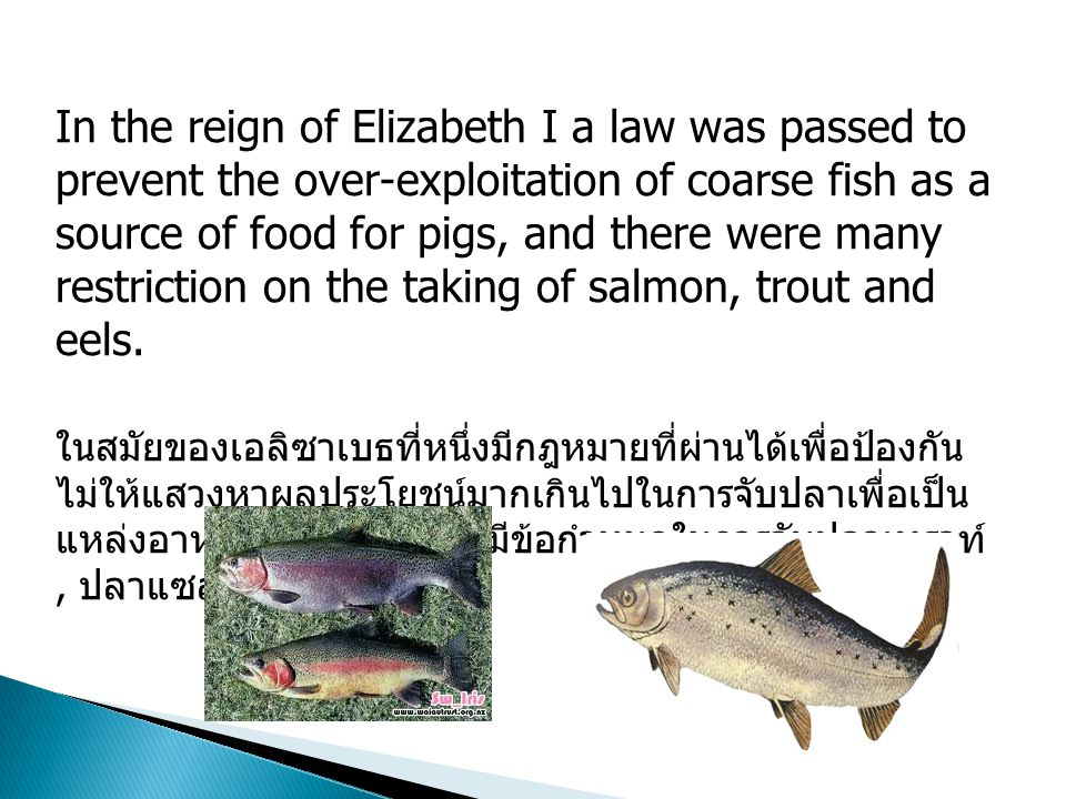 In the reign of Elizabeth I a law was passed to prevent the over-exploitation of coarse fish as a source of food for pigs, and there were many restriction on the taking of salmon, trout and eels.