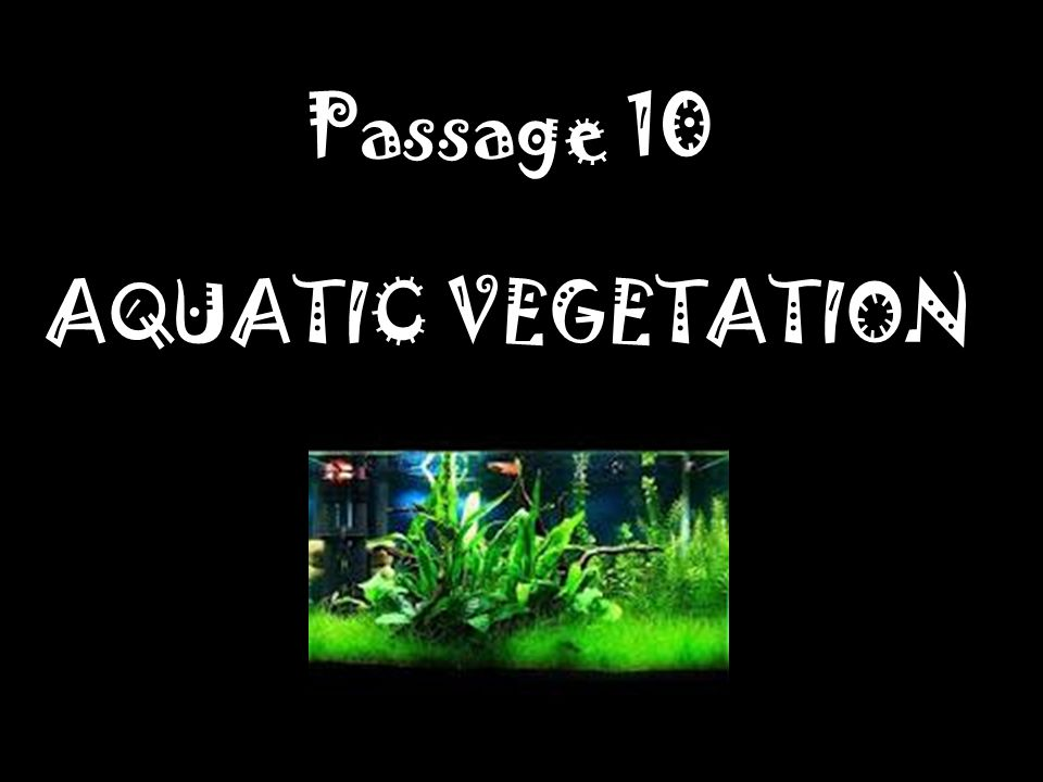 Passage 10 AQUATIC VEGETATION