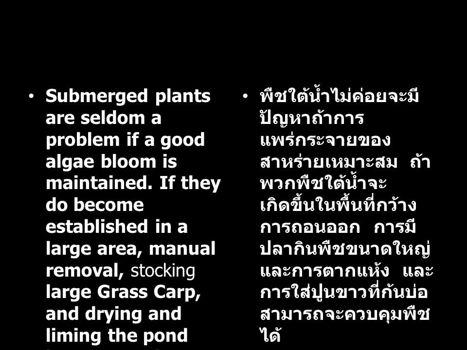 Submerged plants are seldom a problem if a good algae bloom is maintained. If they do become established in a large area, manual removal, stocking lar