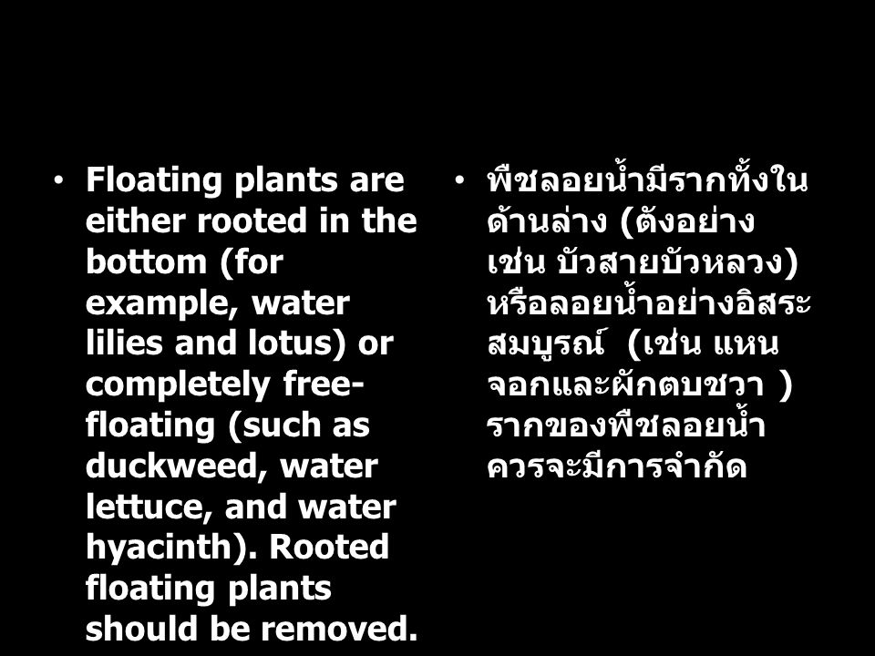 Floating plants are either rooted in the bottom (for example, water lilies and lotus) or completely free- floating (such as duckweed, water lettuce, a