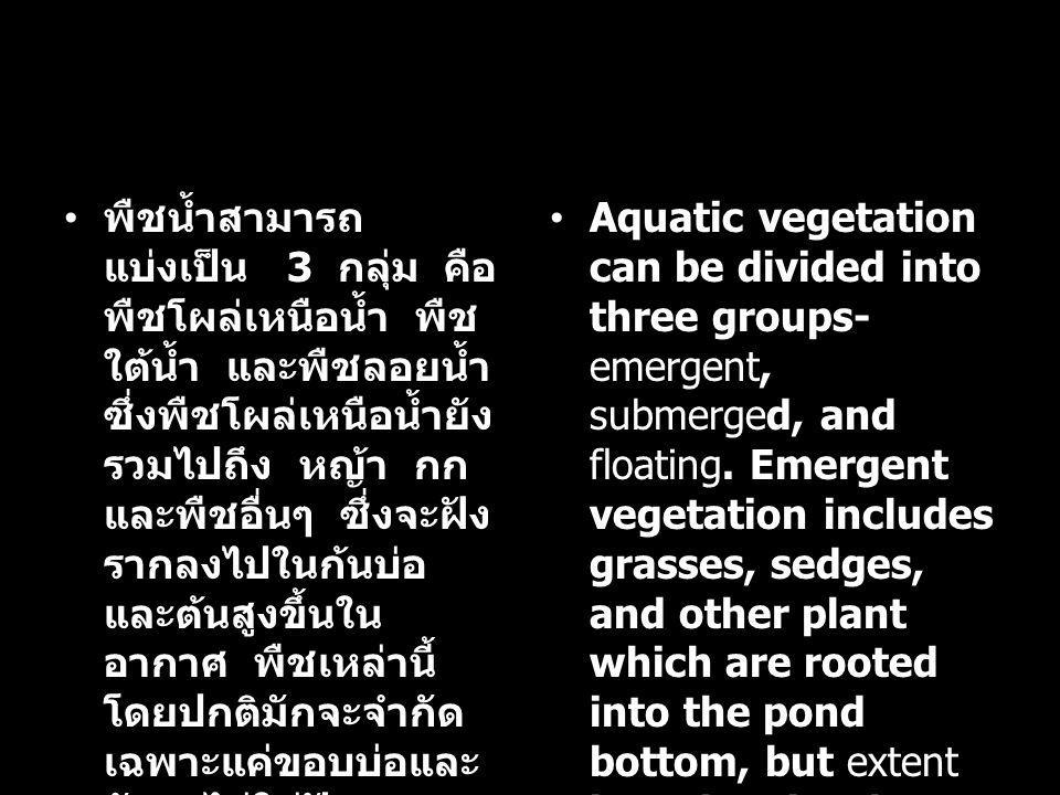 พืชน้ำสามารถ แบ่งเป็น 3 กลุ่ม คือ พืชโผล่เหนือน้ำ พืช ใต้น้ำ และพืชลอยน้ำ ซึ่งพืชโผล่เหนือน้ำยัง รวมไปถึง หญ้า กก และพืชอื่นๆ ซึ่งจะฝัง รากลงไปในก้นบ่