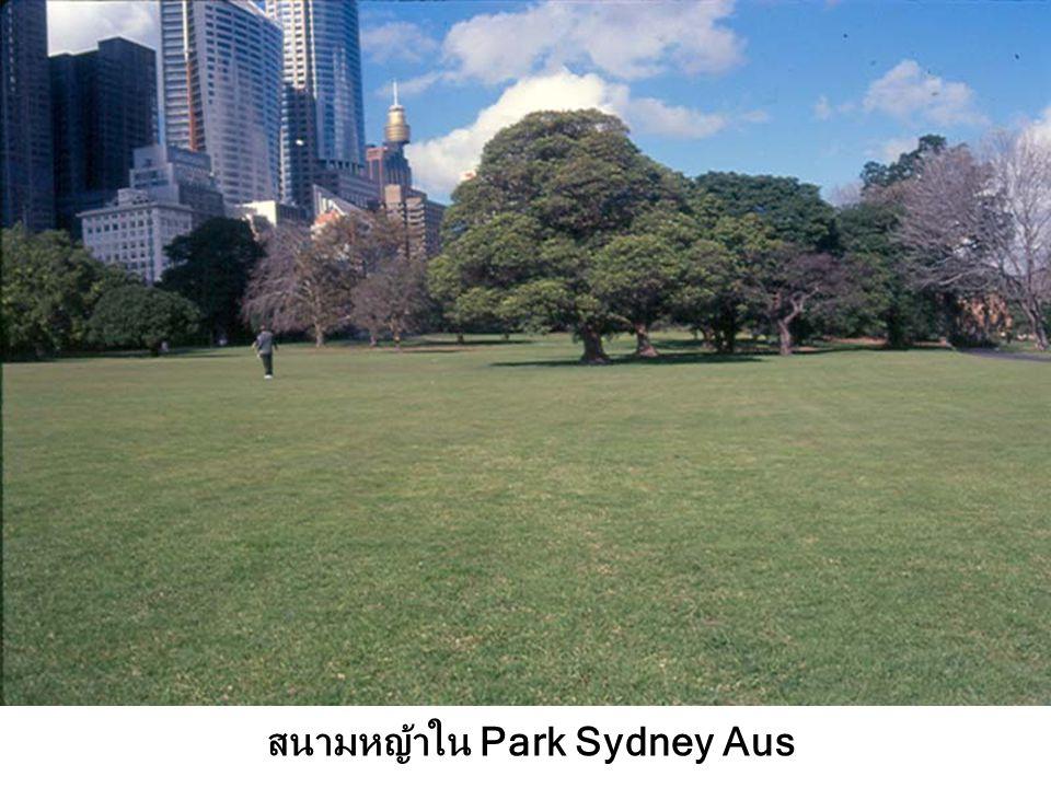 สนามหญ้าใน Park Sydney Aus