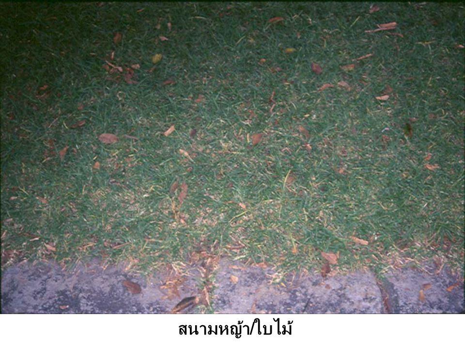 สนามหญ้า / ใบไม้