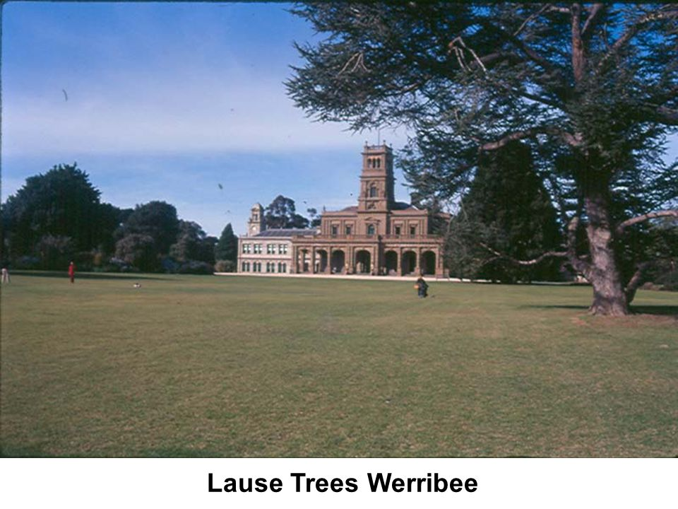 Lause Trees Werribee