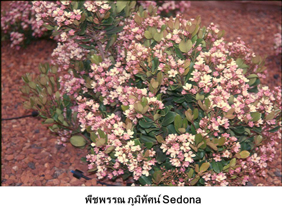 พืชพรรณ ภูมิทัศน์ Sedona
