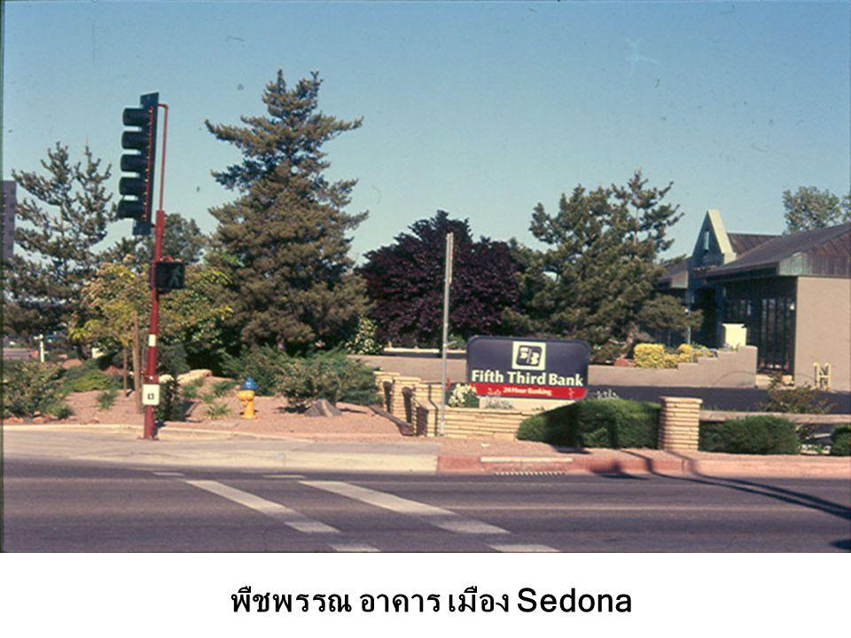 พืชพรรณ อาคาร เมือง Sedona