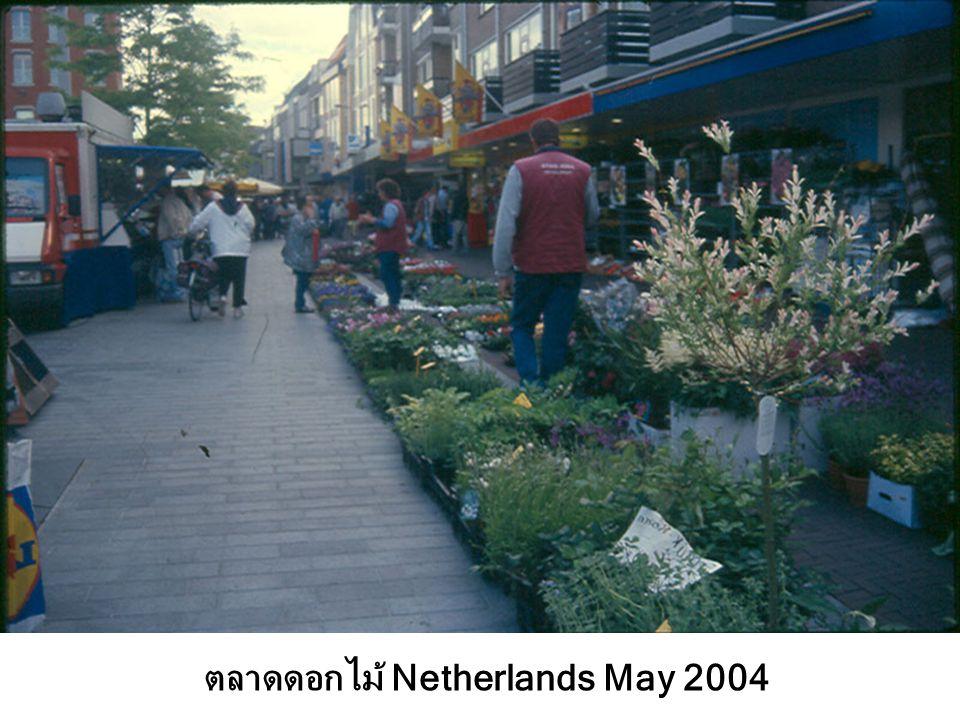 ตลาดดอกไม้ Netherlands May 2004