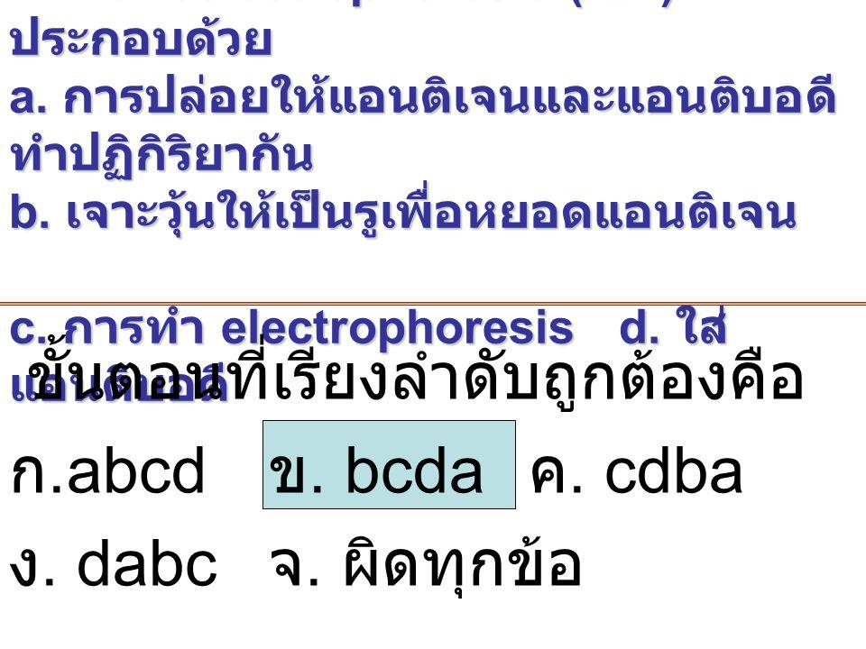 3. ขั้นตอนการทำ immunoelectrophoresis (IEP) ประกอบด้วย a. การปล่อยให้แอนติเจนและแอนติบอดี ทำปฏิกิริยากัน b. เจาะวุ้นให้เป็นรูเพื่อหยอดแอนติเจน c. การท