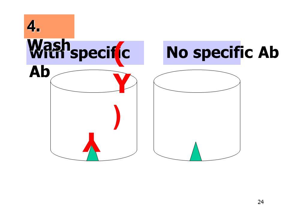 24 No specific Ab Y with specific Ab (Y)(Y) 4. Wash