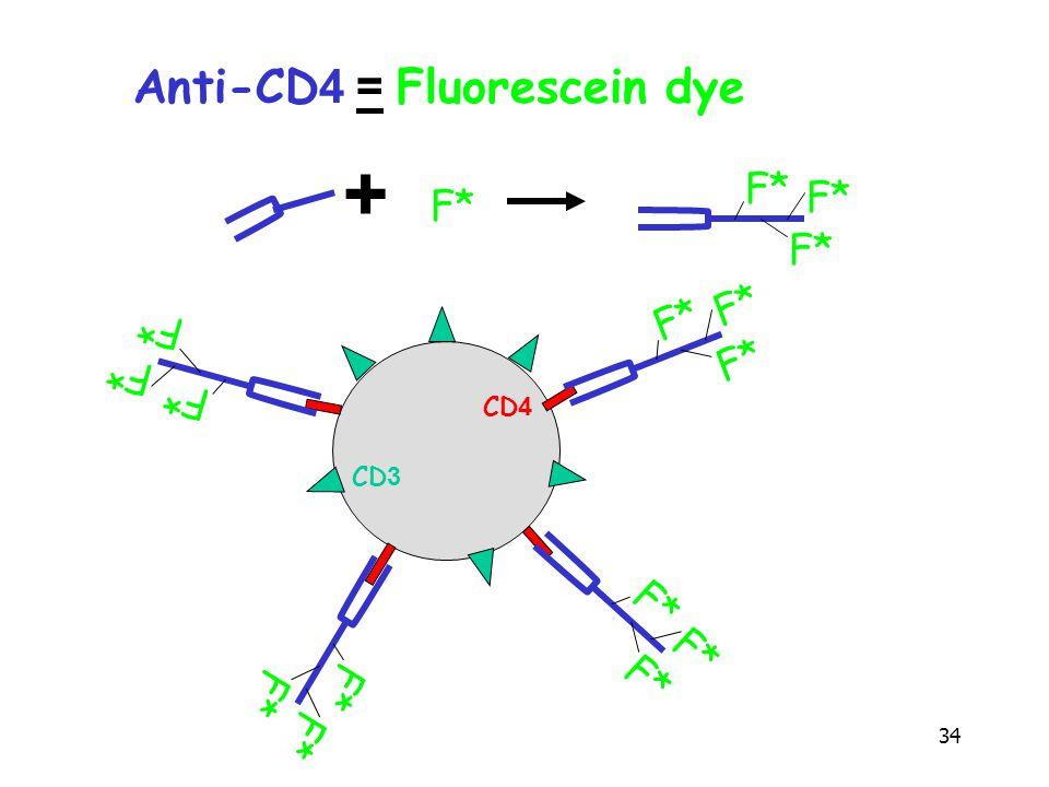 34 CD4 CD3 Anti-CD4 = Fluorescein dye + F*