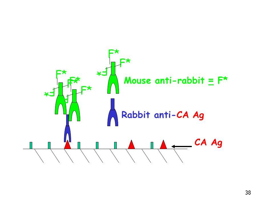 38 F* Rabbit anti-CA Ag F* Mouse anti-rabbit = F* CA Ag