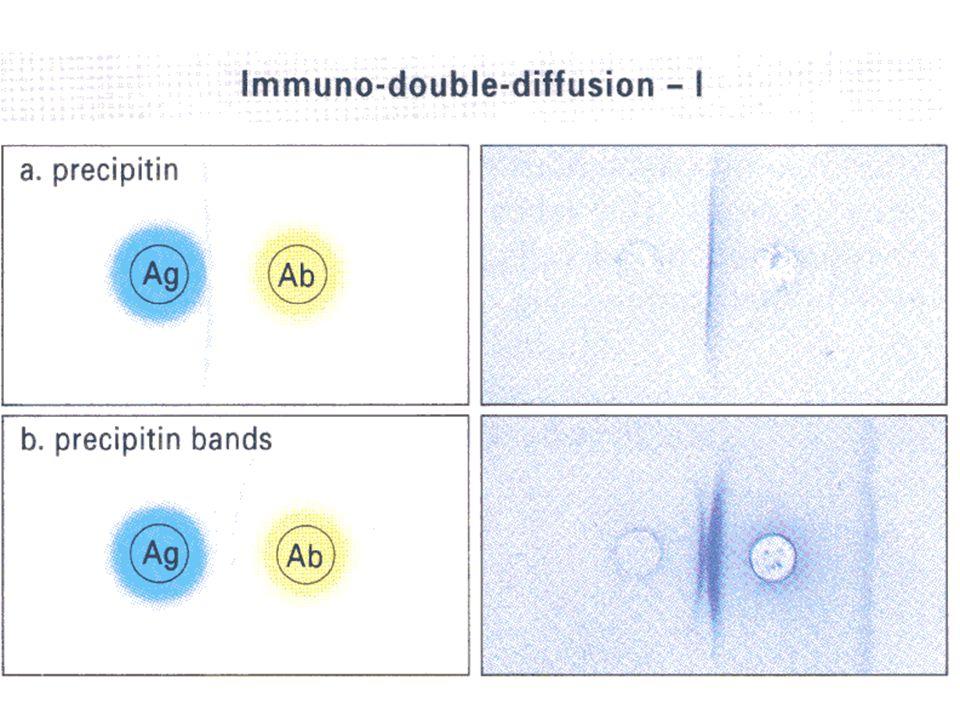 30 วัดค่า Absorbance (O.D.) ความเข้มข้นของสีจะผันแปรกับ ปริมาณ specific antibody ในสิ่ง ส่งตรวจ