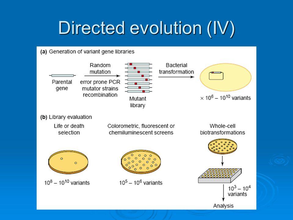 Directed evolution (IV)