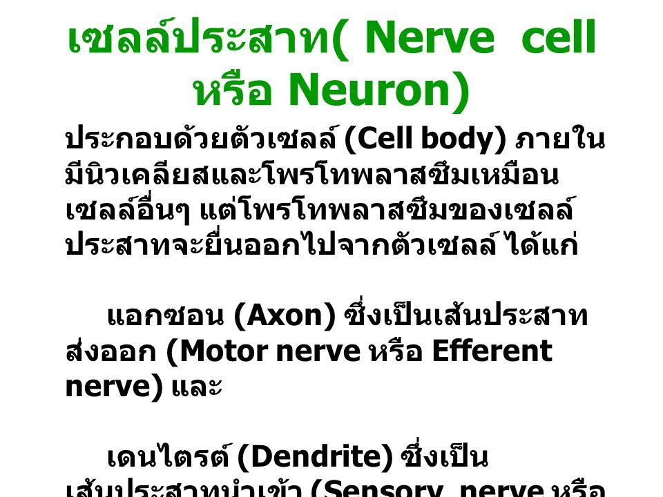 เซลล์ประสาท ( Nerve cell หรือ Neuron) ประกอบด้วยตัวเซลล์ (Cell body) ภายใน มีนิวเคลียสและโพรโทพลาสซึมเหมือน เซลล์อื่นๆ แต่โพรโทพลาสซึมของเซลล์ ประสาทจ
